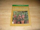 Bloemen-en-planten-in-potten-en-bakken
